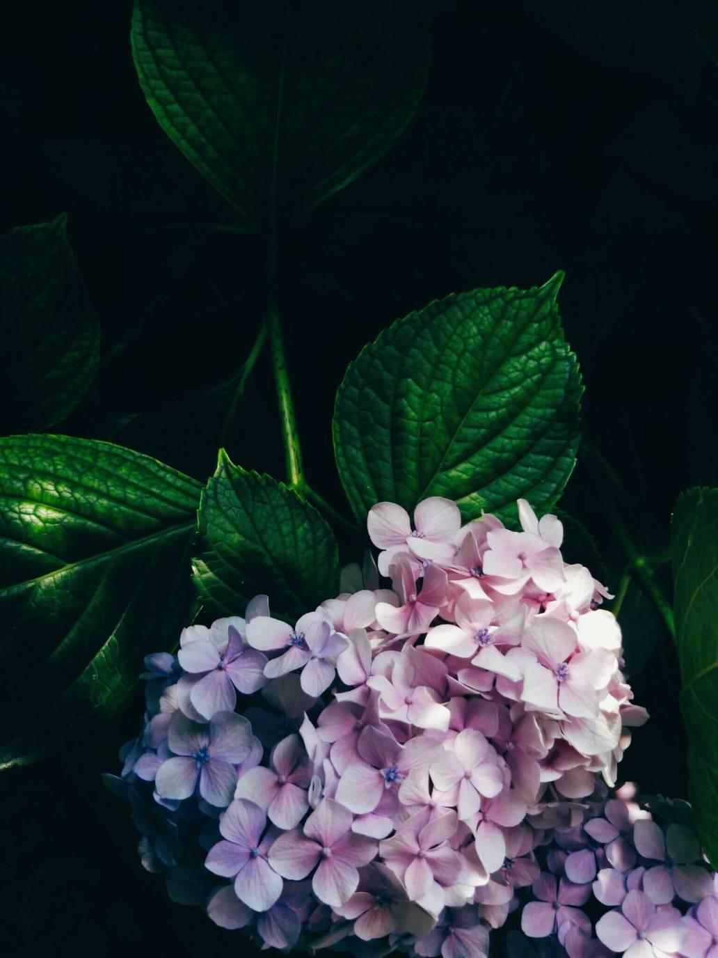 astra liu SguhmV3onew unsplash 2 - Quelques astuces pour bien aménager son jardin