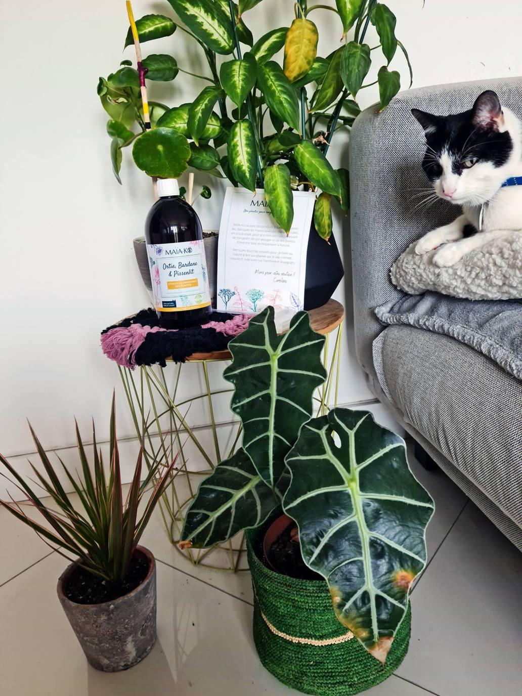 20210512 122801 - Prendre soin des plantes : comment j'entretiens ma jungle urbaine