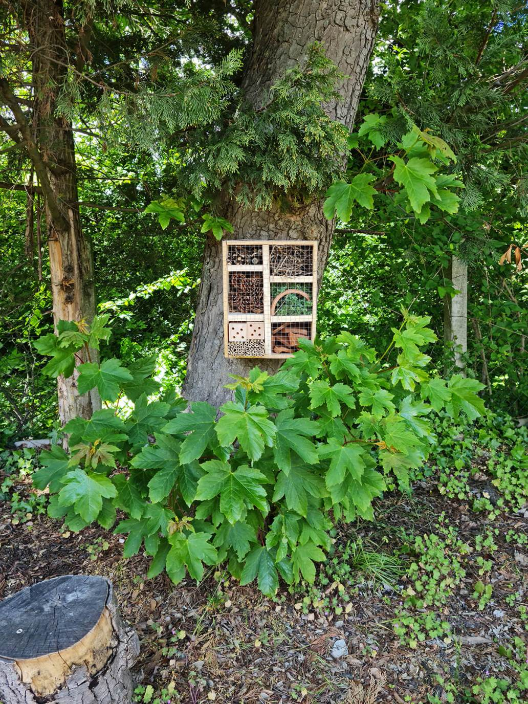 20210521 124839 - DIY jardin : construire un hôtel à insectes avec une caisse à vin