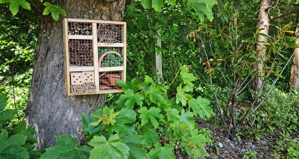 DIY jardin : construire un hôtel à insectes avec une caisse à vin