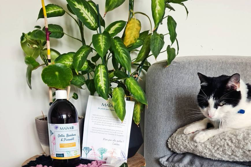 Prendre soin des plantes : comment je fais pour entretenir ma jungle urbaine