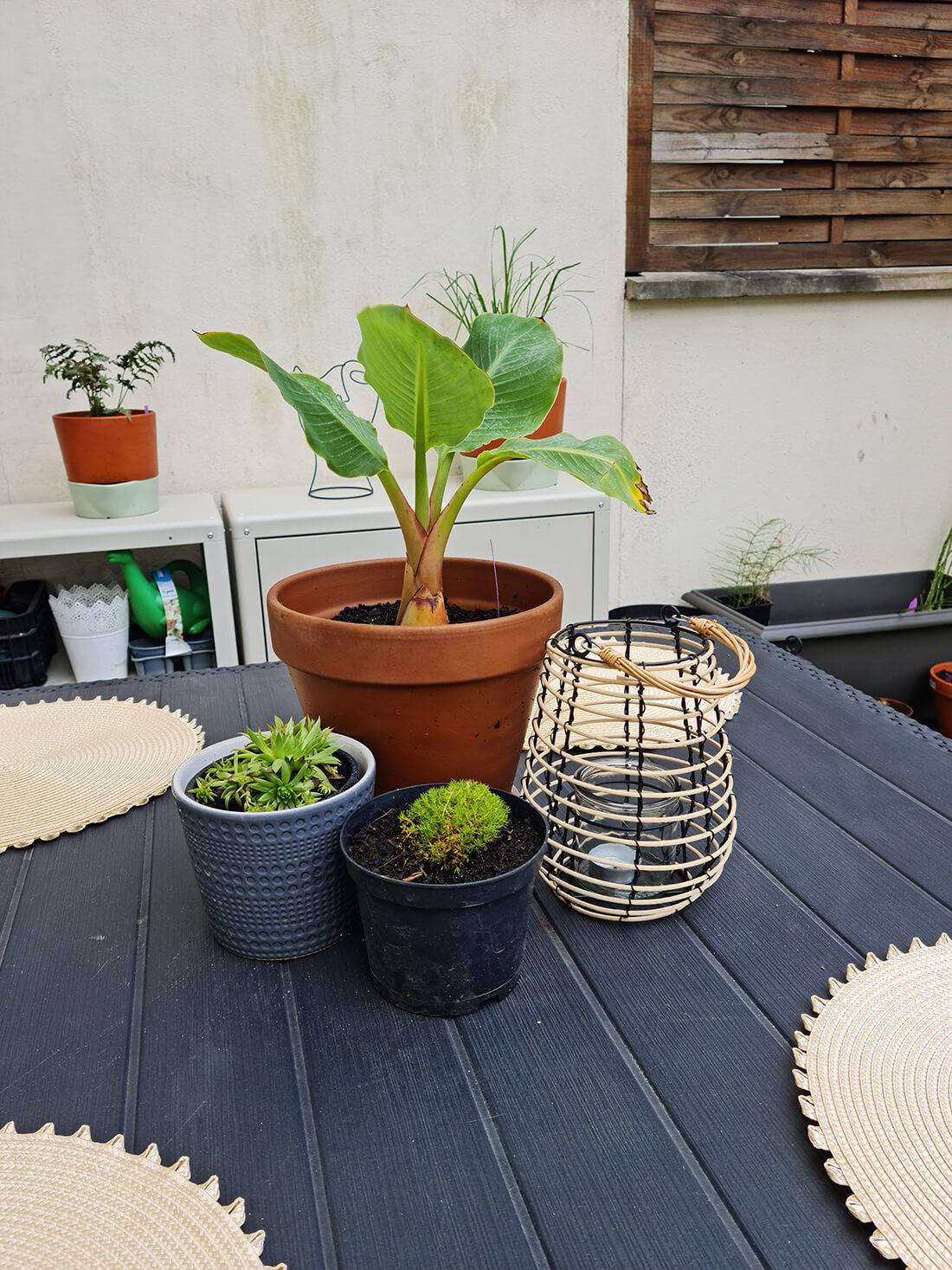20210701 114838 2 - Garden tour : le résultat et la visite privée de mon jardin après relooking