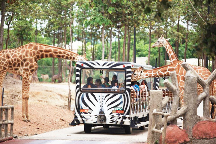 night-safari10