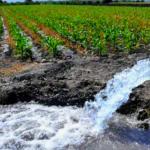 Avalan Ley Federal de Derechos por uso de agua a sector agrícola y pecuario