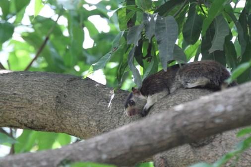 bettersquirrel