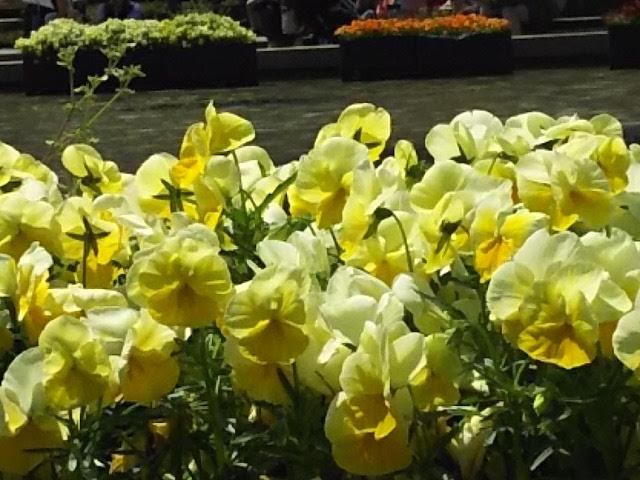 上野公園に咲く花1