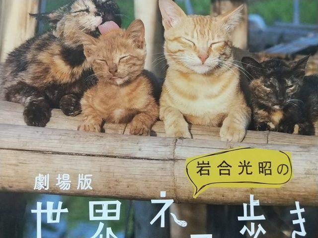 劇場版岩合光昭の世界ネコ歩きポスター