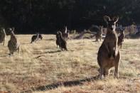 Australia 2014 12