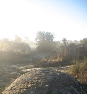Rock in the mist