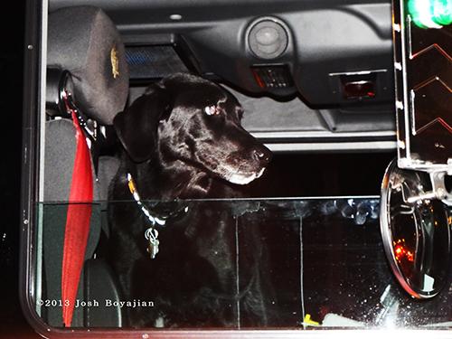 fire department dog