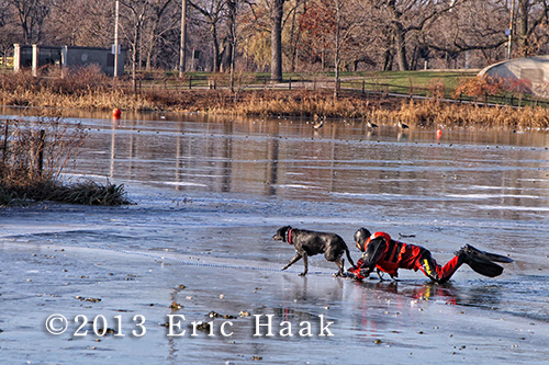 firemen rescue dog from frozen pond