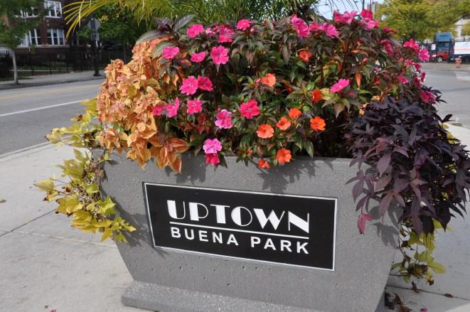 Buena Park, Chicago