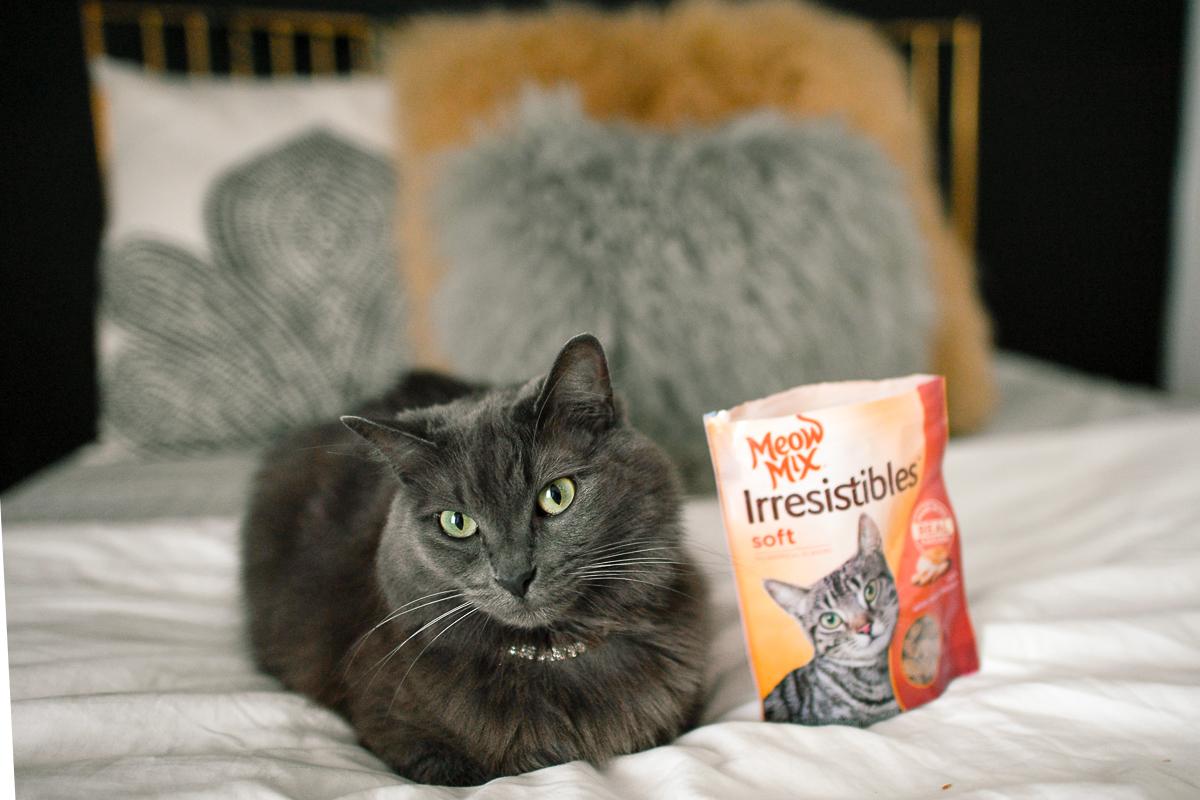 Cute cat enjoying Meow Mix in Chicago