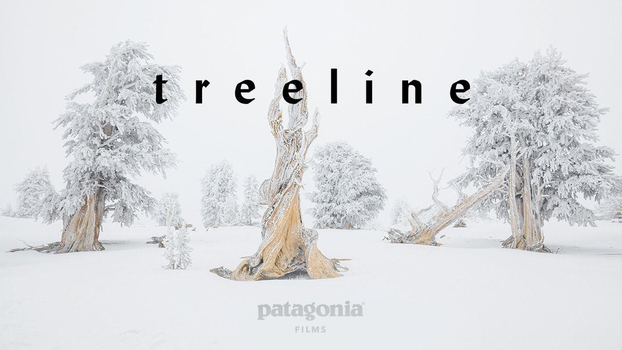 """Movie Night: """"Treeline: A Story Written in Rings"""""""