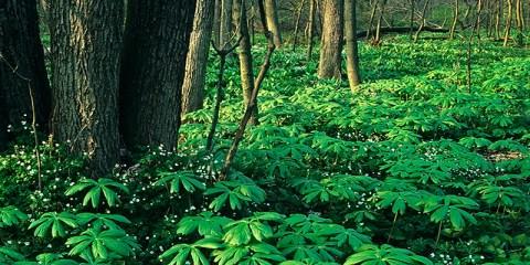 Black Partridge WoodsLemont, Illinois