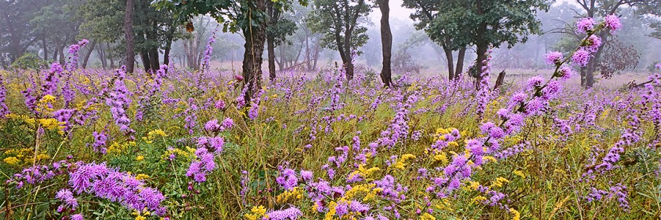 Pembroke SavannaNature PreserveHopkins Park, Illinois