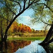 Chicago Fall Color Weekends, Nature Info & News – 10/20/2017