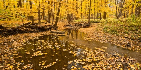 ChicagoNatureNow! ALERT09-26-2019Fall Color Preview