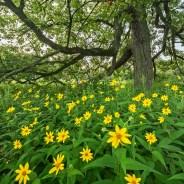 Chicago Nature Adventure Info & News – 08/03/2017 & 08/10/2017