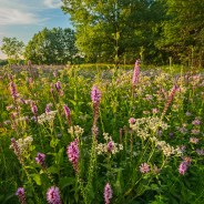 Chicago Nature Adventure Info & News – 07/27/2017