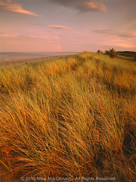 Rare marram grass dominates the foredune along the shore of Lake Michigan at Illinois Beach State Park in Zion, Illinois.*