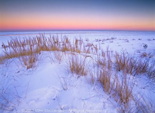 During the winter, sunsets of blue that fade to pink are common in the eastern skies over Lake Michigan. At the end of this blustery day, fluffy plumes of marram grass bounce in the stiff wind. Illinois Beach Nature Preserve—Zion, Illinois*
