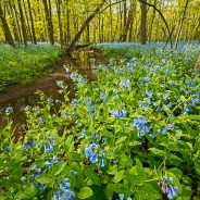 2019 Chicago Nature Spring Preview