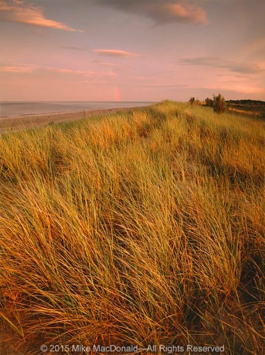 Rare marram grass dominates the foredune along the shore of Lake Michigan at Illinois Beach State Park in Zion, Illinois.