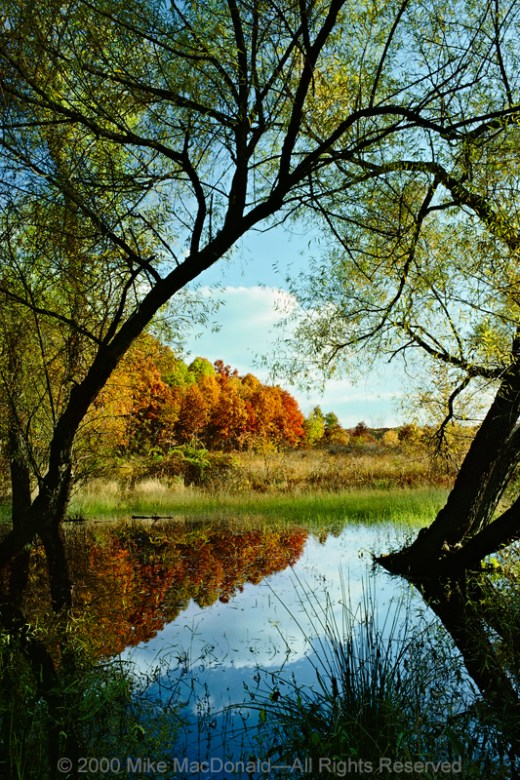 At Spears Woods, this ephemeral pond becomes a portal into an afternoon of autumn splendor.
