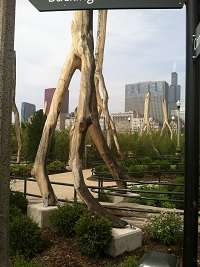 Enchanted Forest Maggie Daley Park