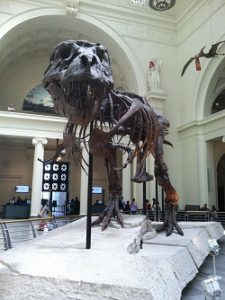 Field Museum Sue