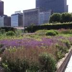 Lurie Garden open