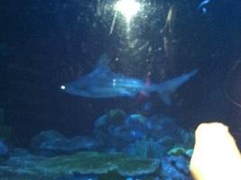 Wild Reef Shedd Aquarium