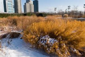 Lurie Garden winter