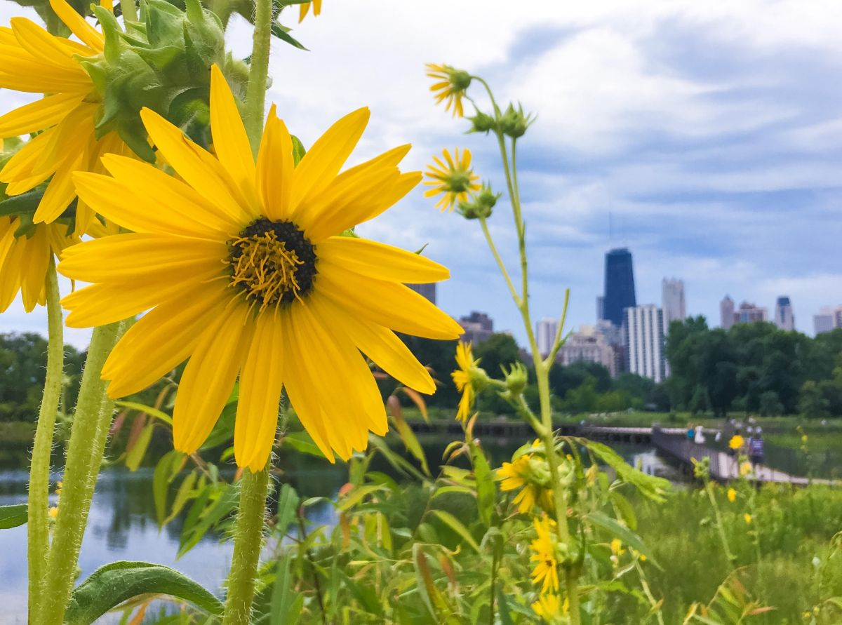 Chicago Weekend Guide May 18-20, 2018