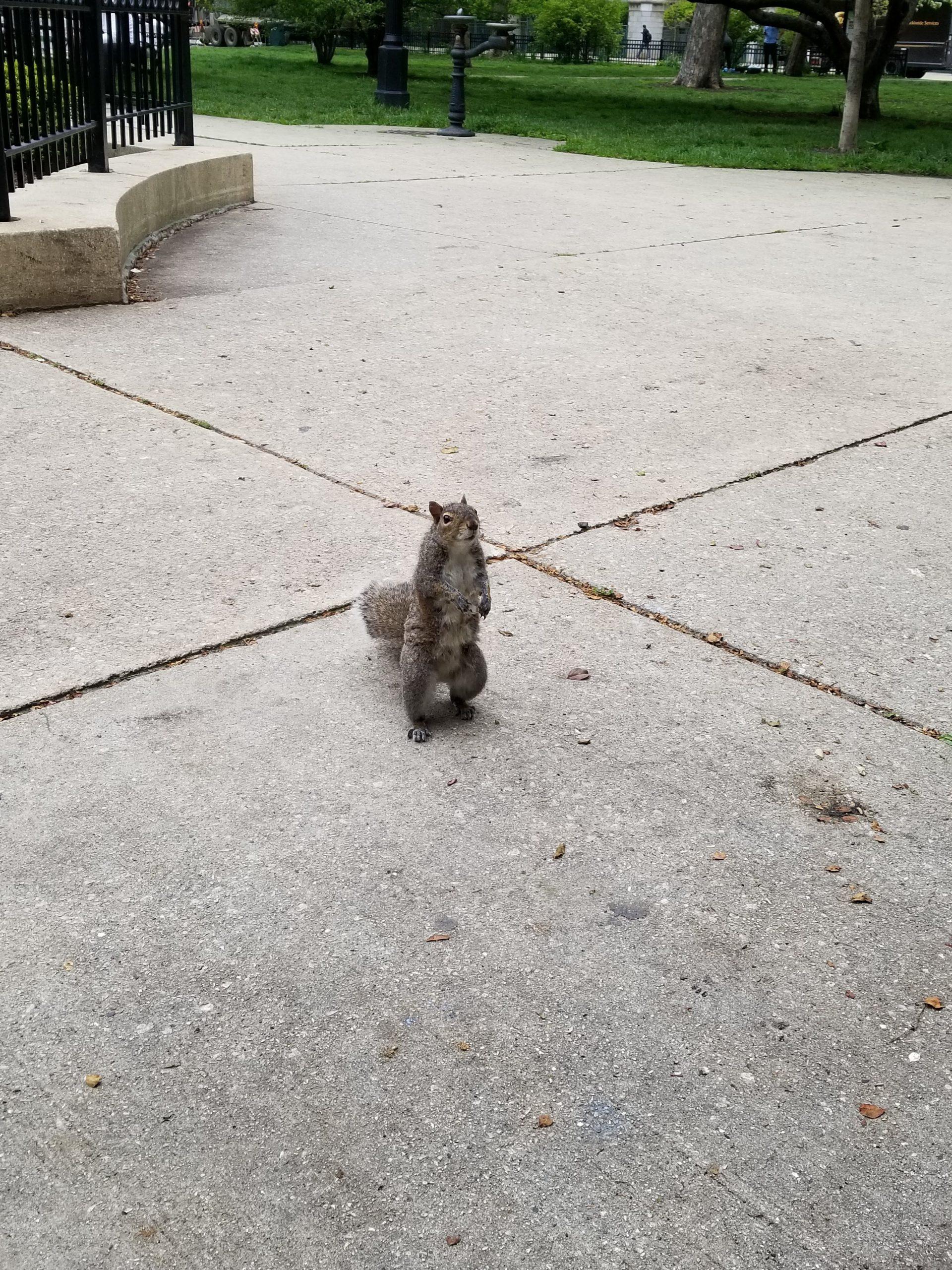 A not-quite-squirrelly squirrel