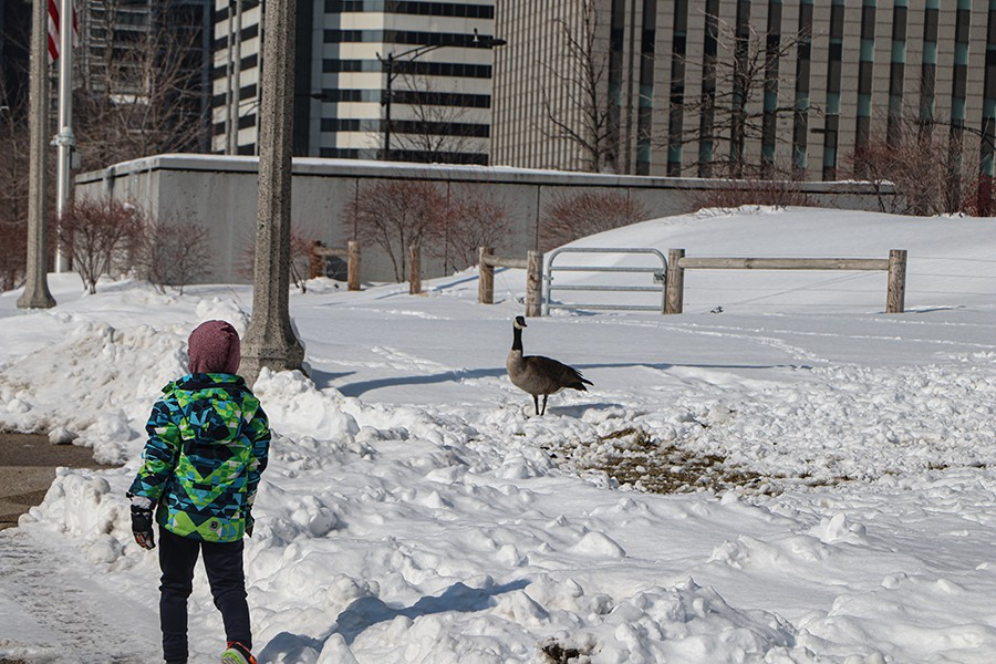 This child is one of several people that stopped to look at a Canada Goose on the side of a sidewalk in Maggie Daley Park on February 19.