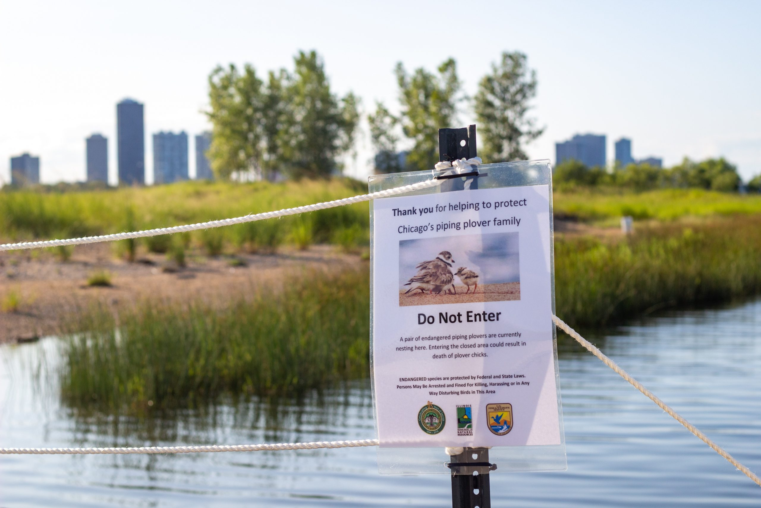 Federal, state and city agencies, as well as local organizations, participated in efforts to protect the piping plovers.