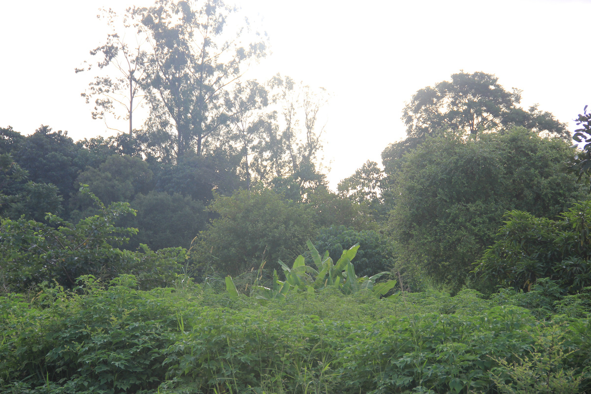 On their Bandcamp page, Causings use this landscape shot that cofounder Derek Baron took in Malawi instead of a band photo. To the best of my knowledge, the collective has yet to include a tree.
