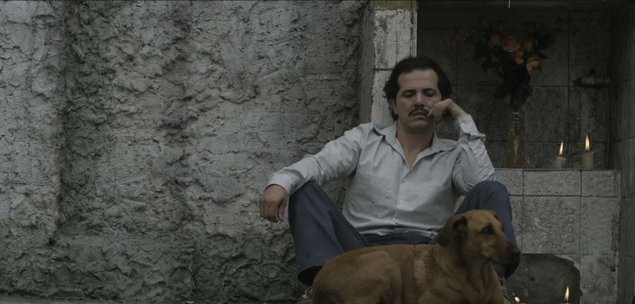 <i>Dogs</i>