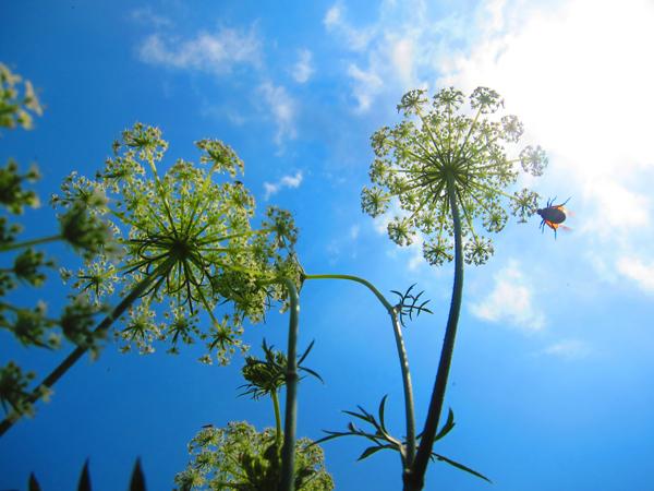 <em>Bug and Flowers.</em> Waveland and the lakefront, July. By Gene Tenner