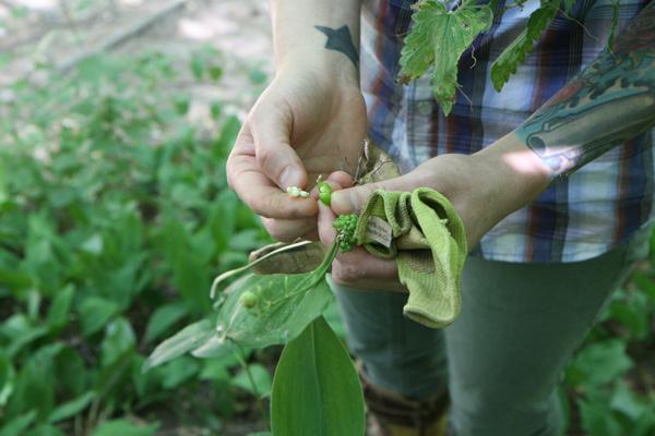 Iliana Regan and a handful of foraged ramp fruit