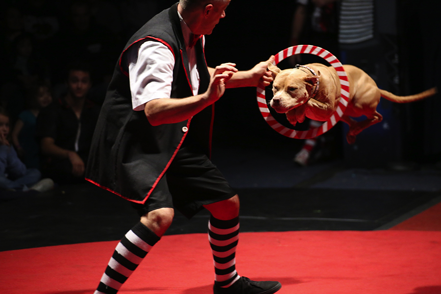 Jeff Jenkins and Rosie, the most ferocious beast at Midnight Circus