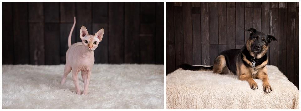 Red Deer Pet Photographer