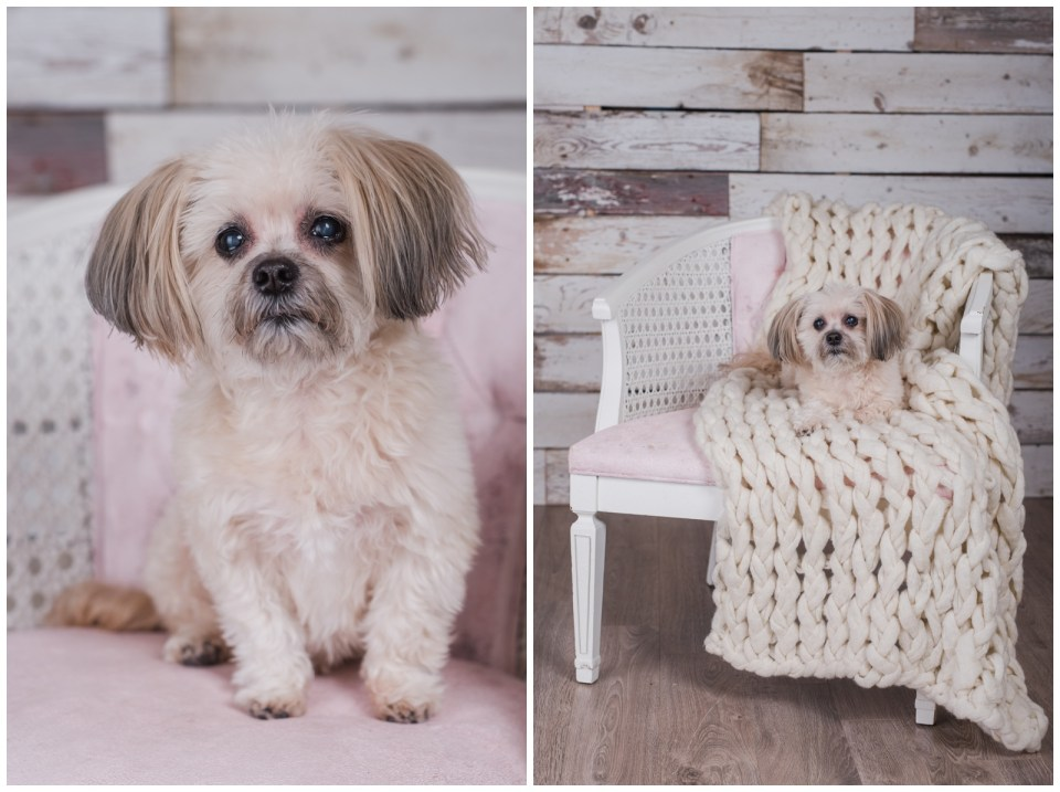 Senior pet portraits in th estudio