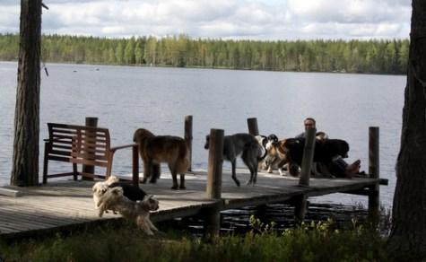 Aurinkoista aamua laiturilla kera koirien