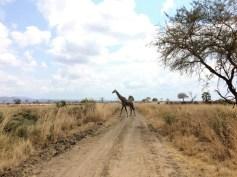 Mojhi Usambara Mikumi Safari