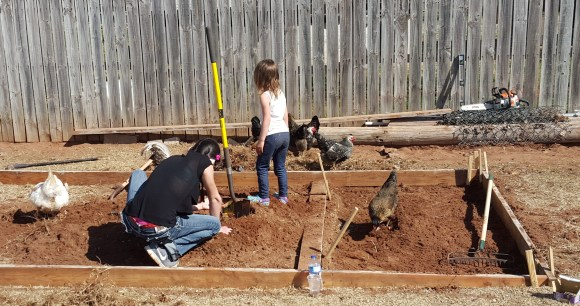 chickens and kids helping dig chicken coop