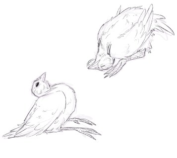 Sketch of Chickens with Newcastle Disease Courtesy of Hannah Smith
