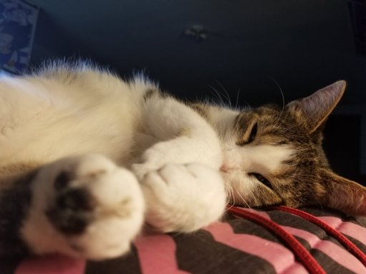 cutest picture of cat
